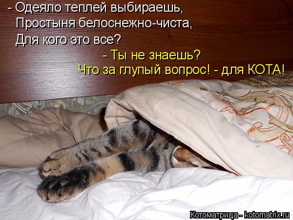 Котоматрица: - Одеяло теплей выбираешь, Простыня белоснежно-чиста, Для кого это все? - Ты не знаешь? Что за глупый вопрос! - для КОТА!