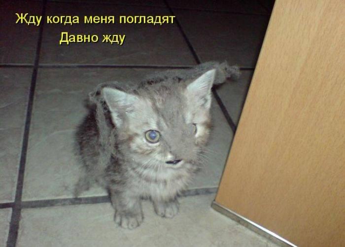 http://doseng.org/uploads/posts/2011-06/1308084426_1299527986_1299230221_kotomatrix_40.jpg