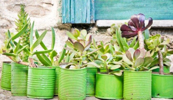 Шесть популярных суккулентов, которые украсят ваш дом