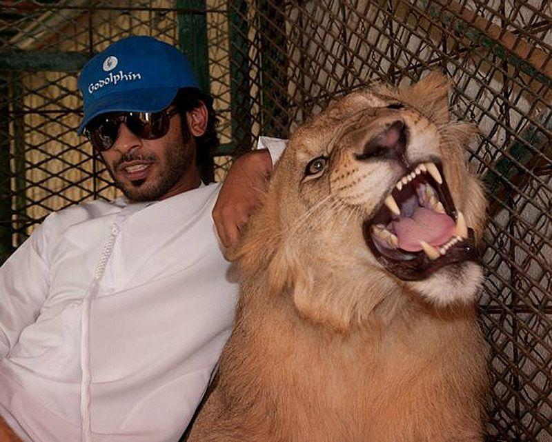 catsncars13 Хищные кошечки и дорогие машины: досуг арабского миллионера