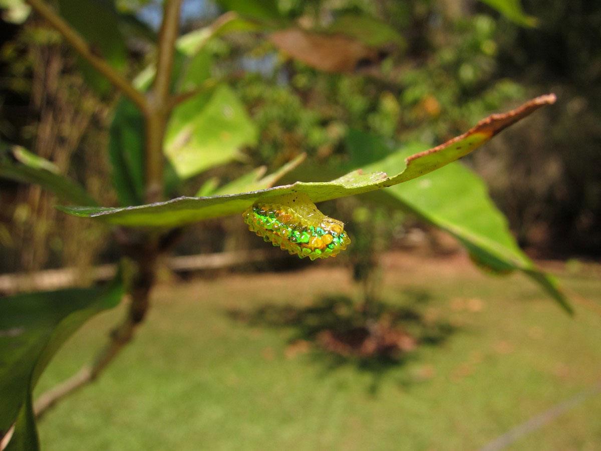 насекомое на листочке
