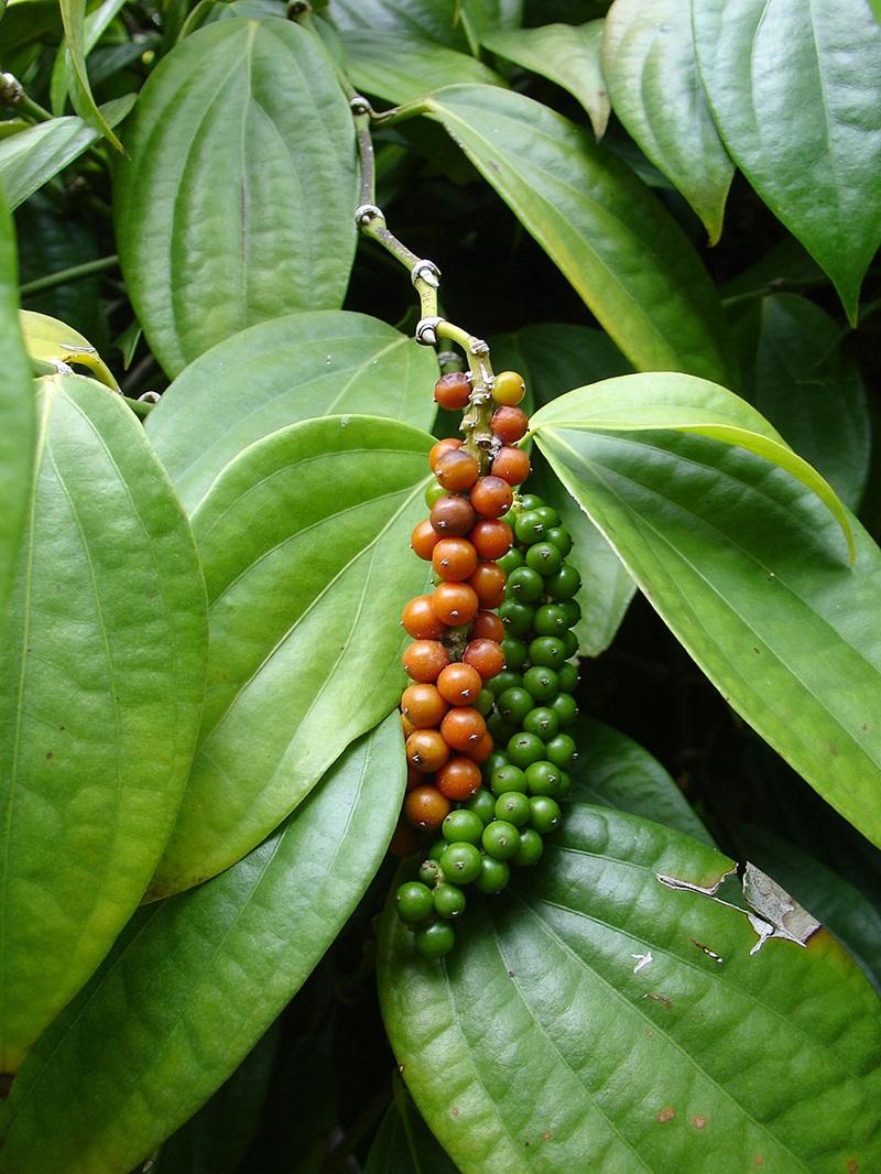 Как растут некоторые обычные для нас специи, овощи и фрукты
