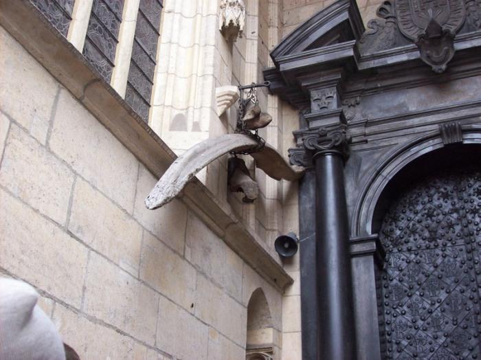 Кости Вавельского дракона. | Фото: commons.wikimedia.org.