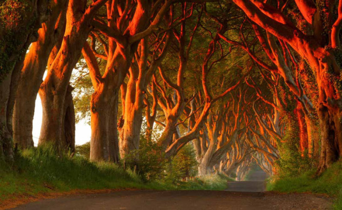 Удивительные леса мира