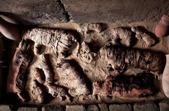 В Египте нашли множество кошачьих мумий