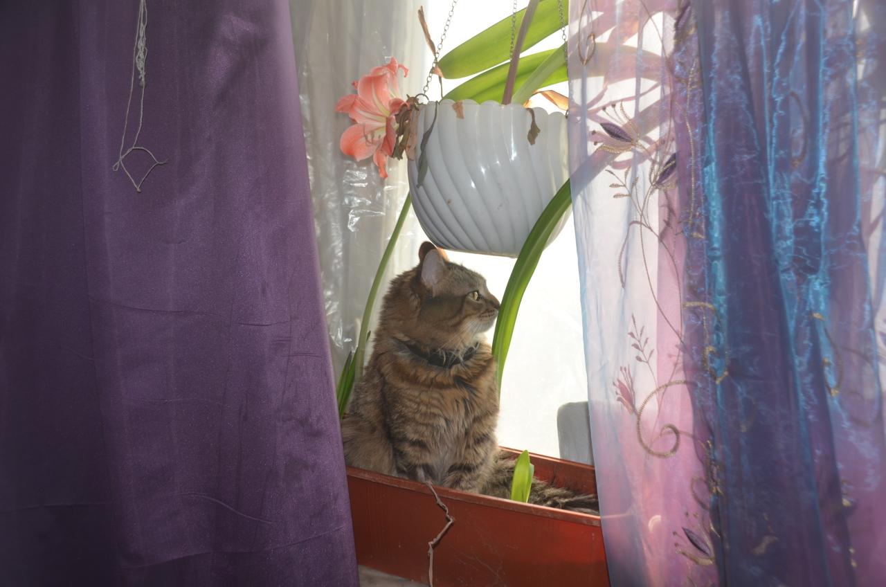 Кот реагирует на телефон. Нужен совет