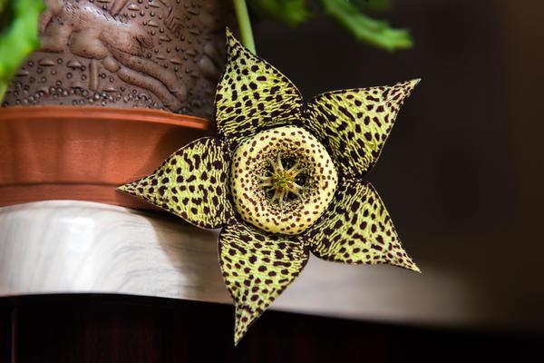 Самые экстравагантные комнатные растения