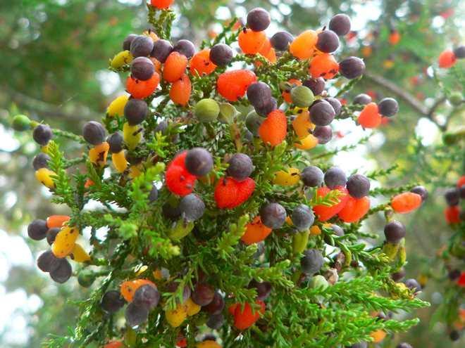 Все фрукты на одном дереве – больше не сказка