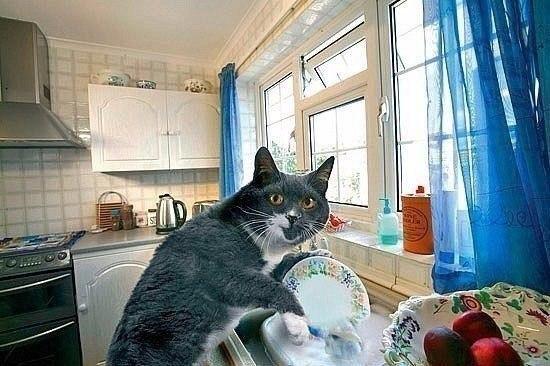 Хoчу тaкого кота!