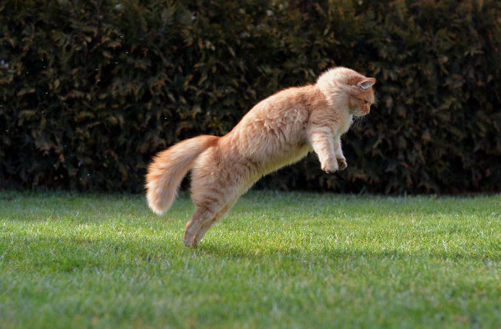 История про дворового кота жулика, который обманул всех соседей