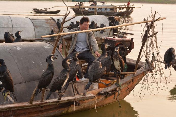Рыбная ловля с бакланами