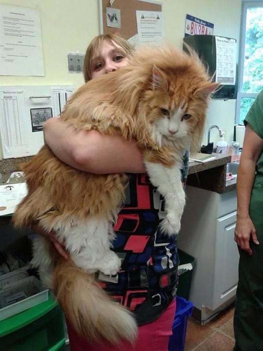 Испуганный кот прижался к своей хозяйке. | Фото: vk.com