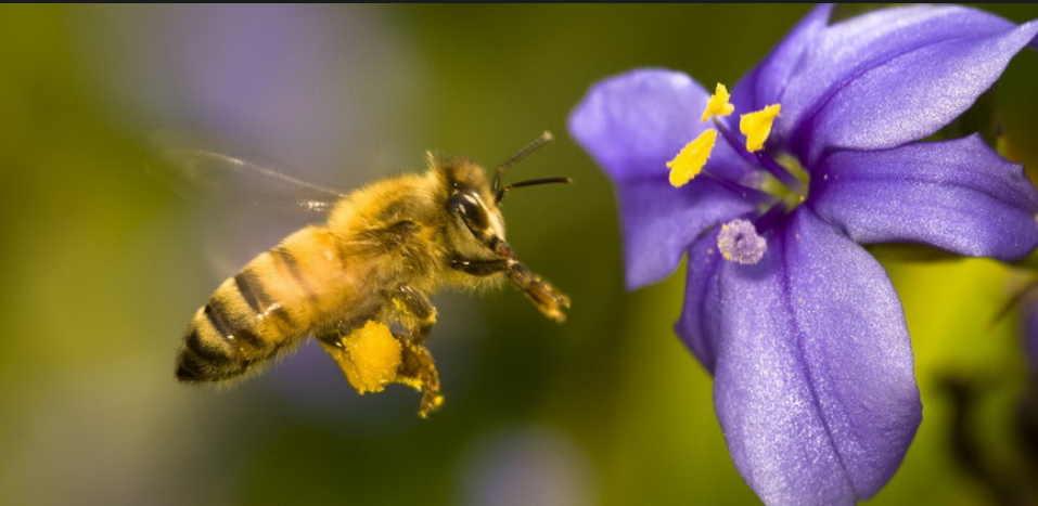 Если покусали пчелы - чем опасно и как быстро помочь себе или другому человеку. Когда полезное становится смертельным!