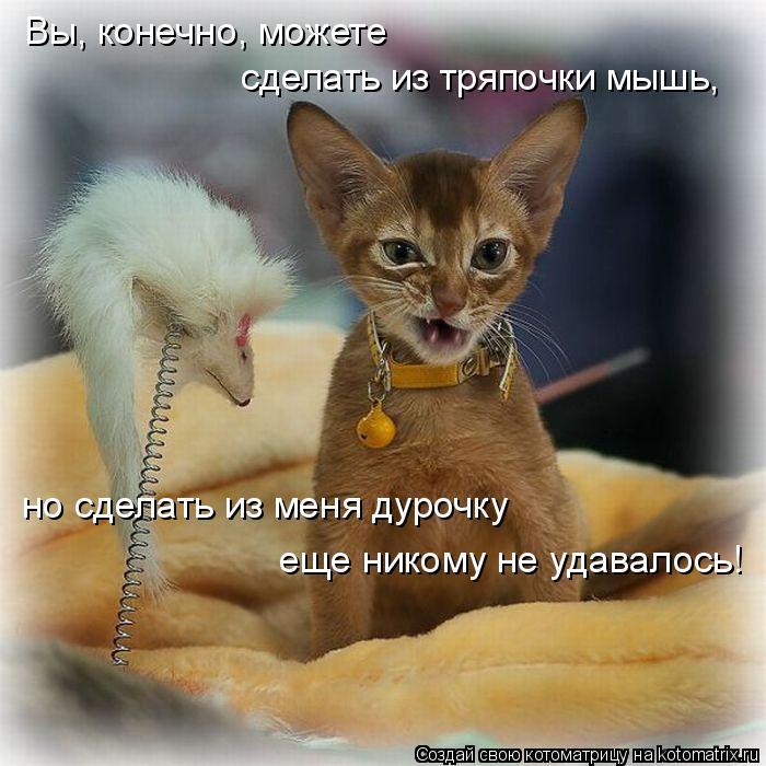 ХА-ХАтунчики)) (котомашки)