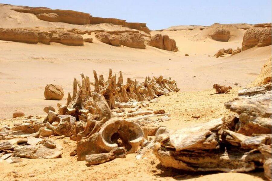 Вади аль-Хитан: место в Сахаре, где жили киты