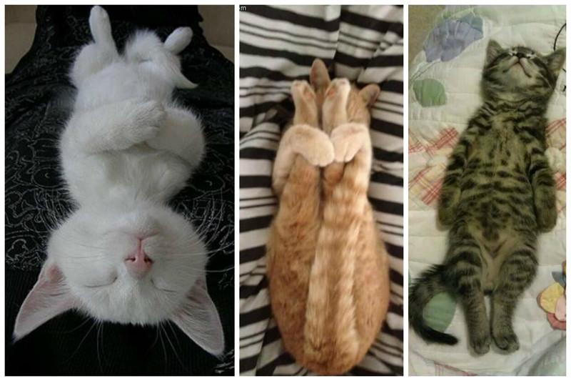 И просто наслаждаться жизнью коты, милота, поведение, счастье, эмоции