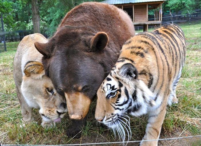 Настоящая дружба среди животных