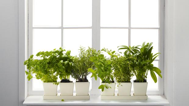 14 пряных трав, которые можно выращивать дома