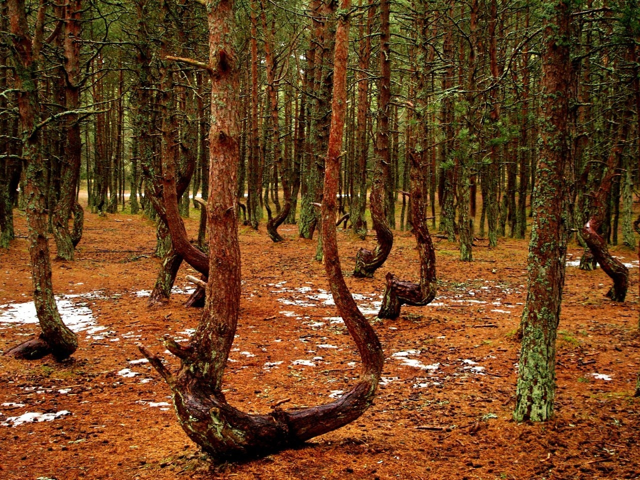 Странный секс в лесу 15 фотография