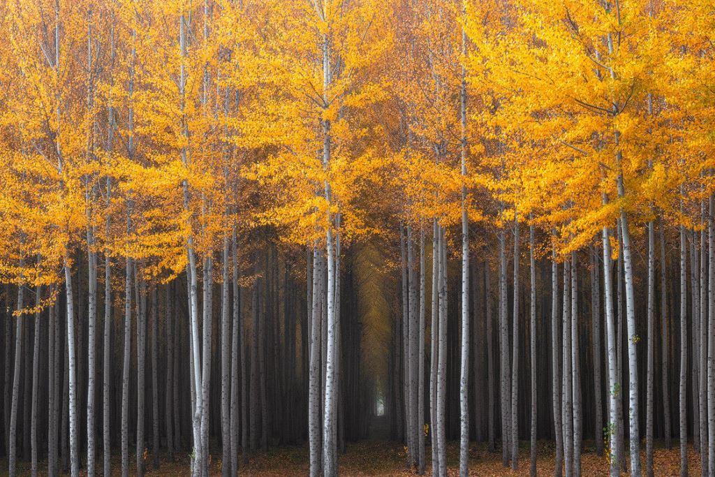 Природа во всей своей красоте-15