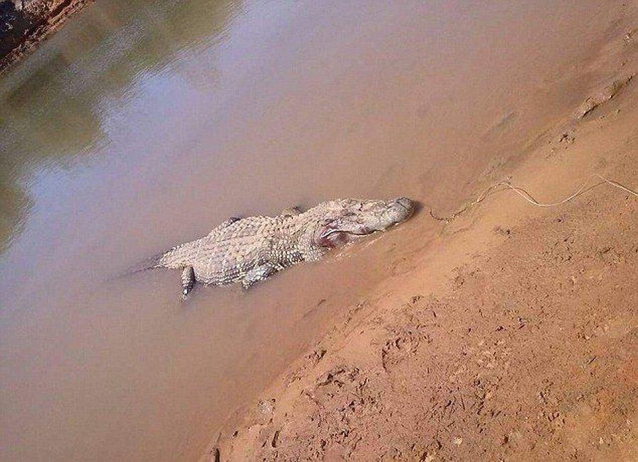 После вскрытия крокодила нашли останки фермера