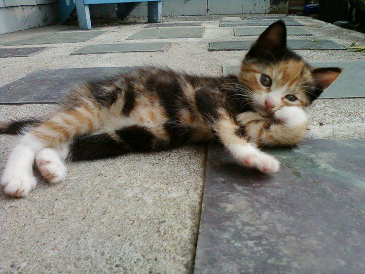 коты модели (2)