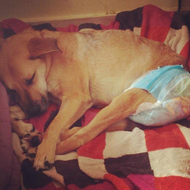 форум как ухаживать за парализованной собакой правильно резать