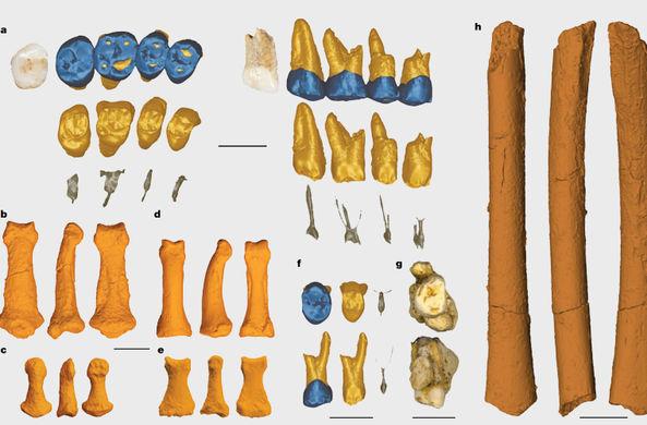 Останки совершенно нового вида людей обнаружили на Филиппинах