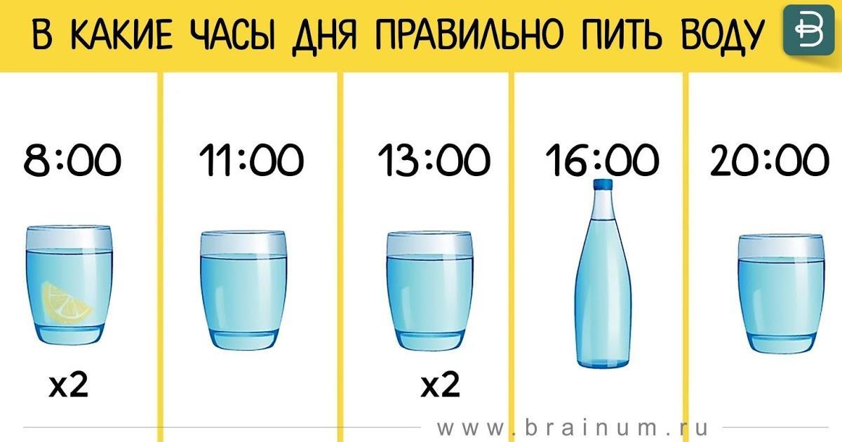 В какие часы дня правильно пить воду