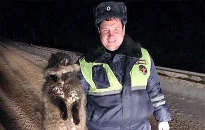 Полицейские спасли енота от гибели на трассе в Подмосковье