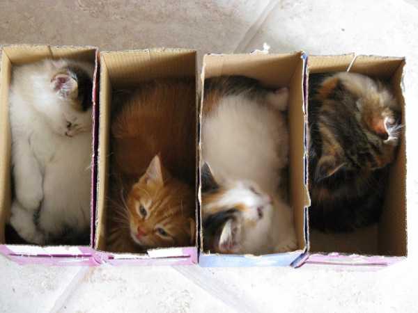 Почему котики любят залезать…