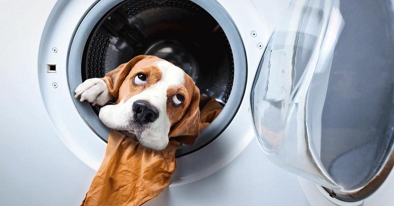 Какие необычные вещи можно стирать в стиральной машинке