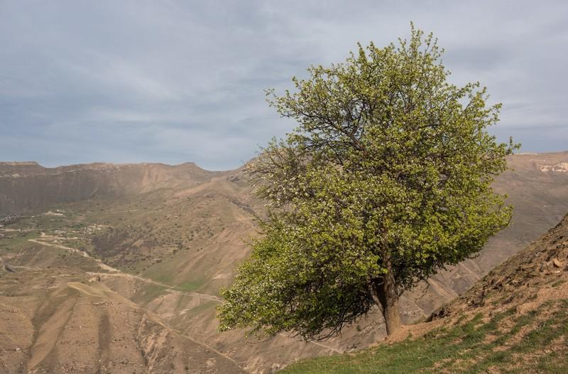 Гамсутль — заброшенный аул в Дагестане Гамсутль, дагестан, путешествие, россия