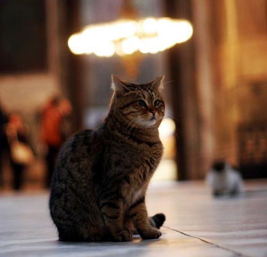 ГИФ-ки кошачьи, умилительные + парочка воинственных+ одна наркоманская.