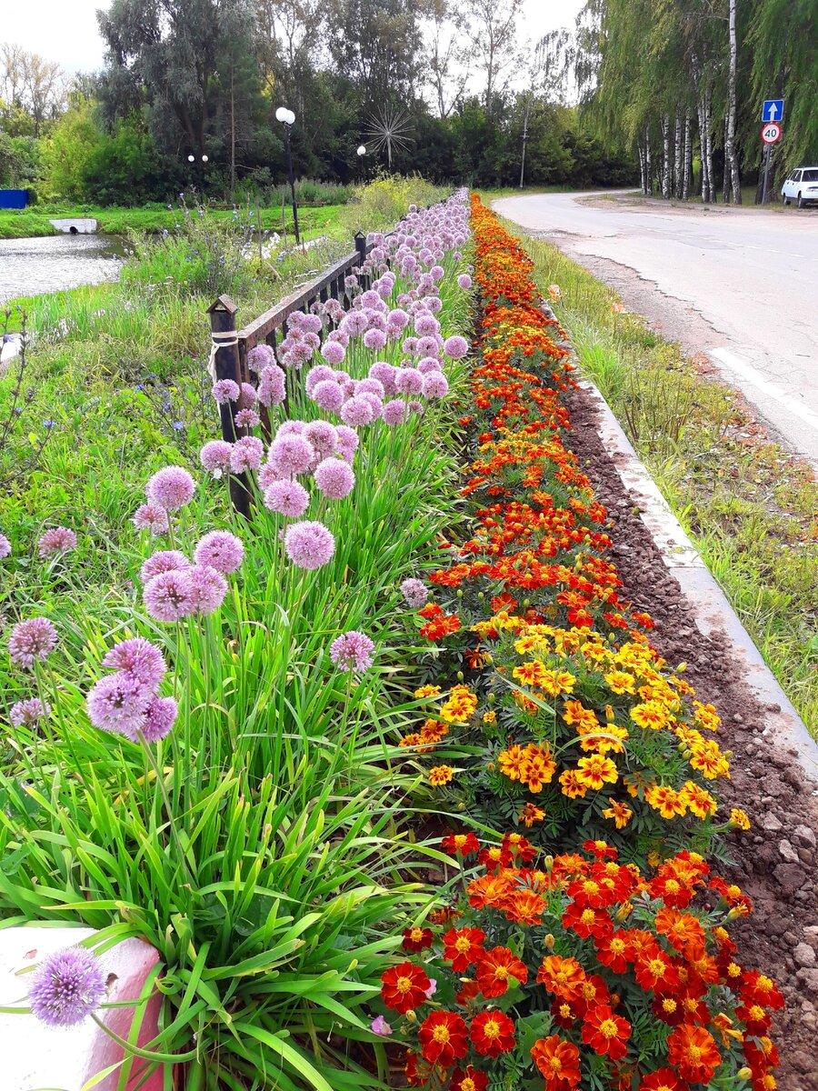аллея цветов у дороги