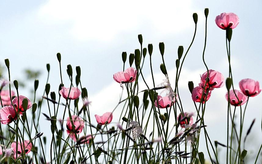 Выставка цветов в Челси 2014