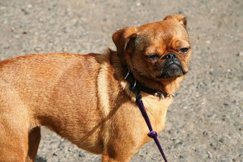 Очаровательные помеси собак (21 фото)
