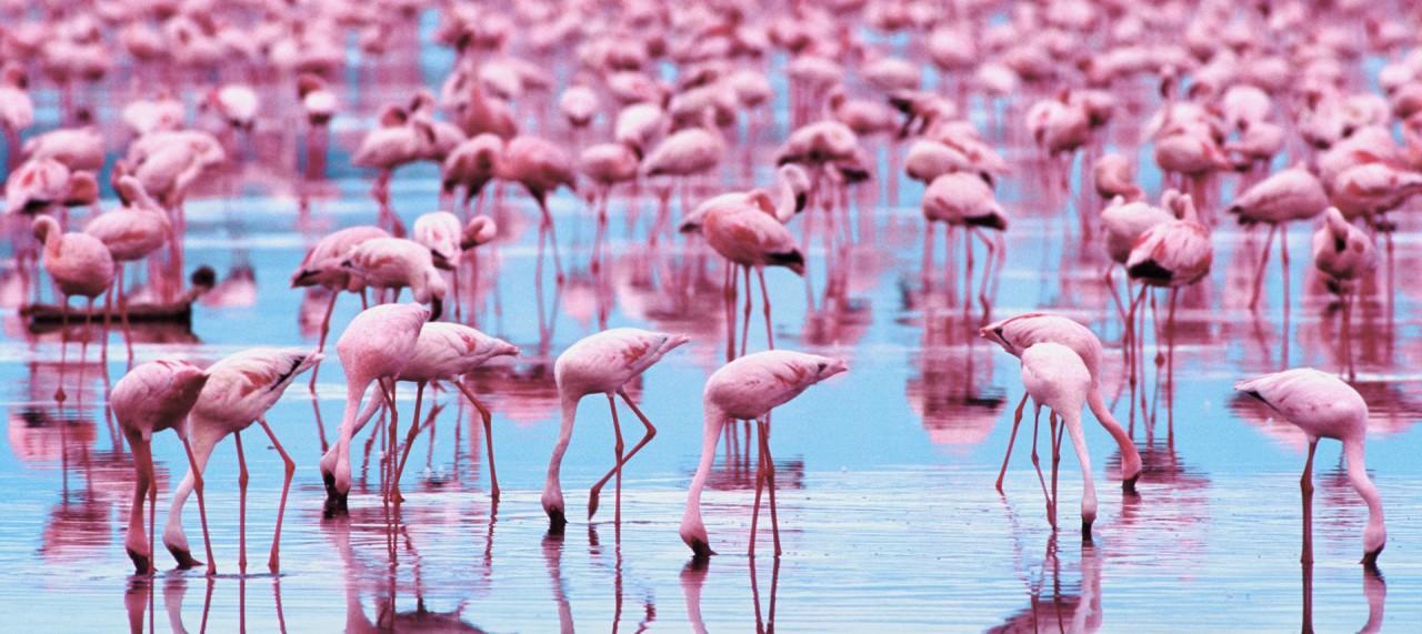 Стойкие фламинго