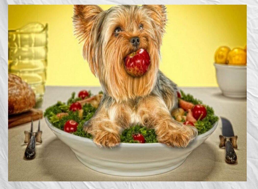 «Все на завтрак», как наша собака собрала утром всех домочадцев, чтобы получить свою порцию