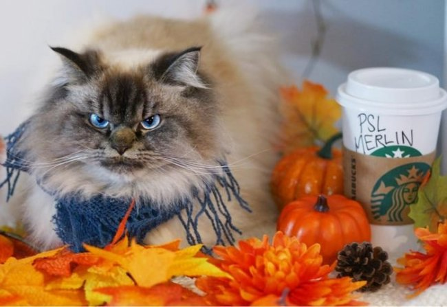 Самый злой кот в мире Мерлин (21 фото)