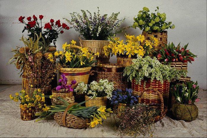 Какие ваши любимые комнатные цветы. Что выращиваете?