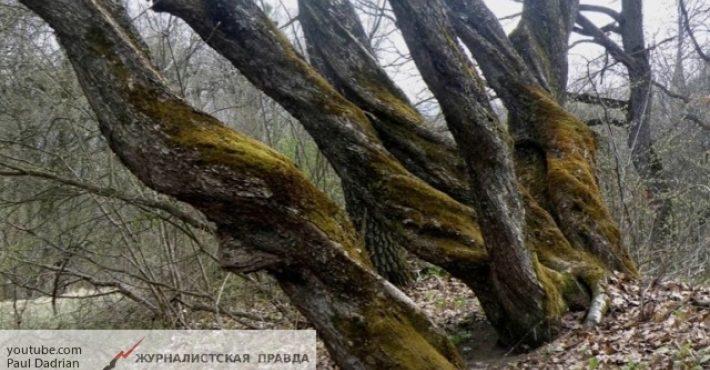 «Бермудский треугольник» в Румынии признан самым ужасающим и таинственным местом на Земле