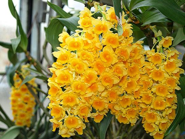 Правильный уход - важное условие для пышного цветения