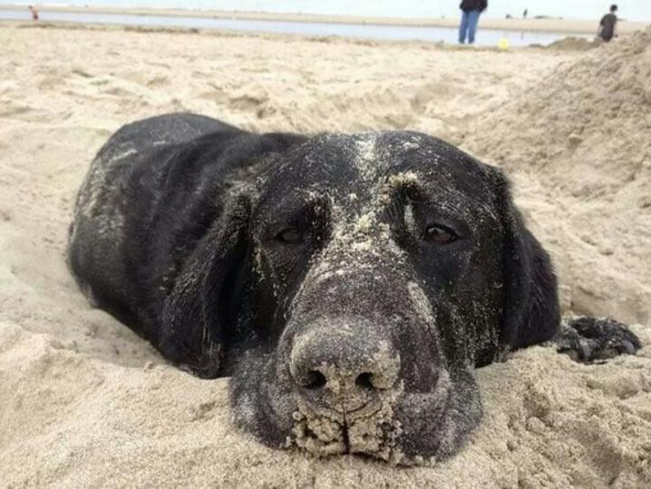 Женщина кричала, что не будет плавать в одной воде с собакой.