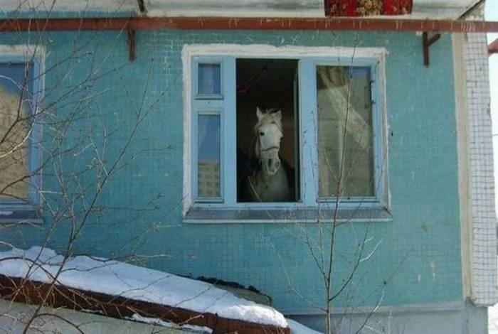 3. Я все-таки котика больше ожидал увидеть девушки, смешно, сосед в окне, фото