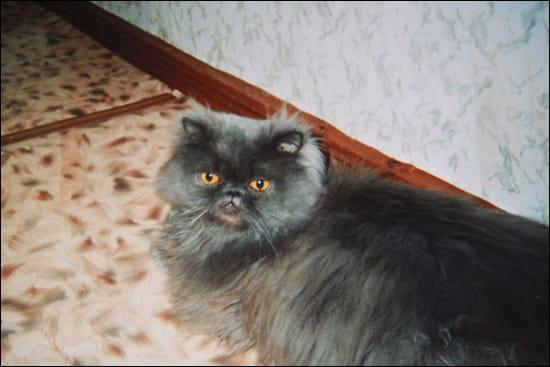 Домашнего кота Яшку по решен…