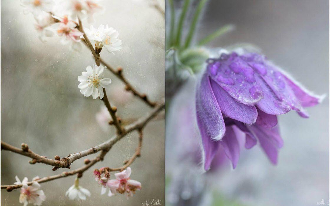 Красивая фотография цветов и…