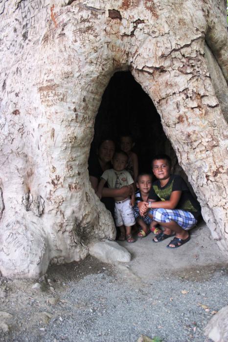 В чинаре могут поместиться несколько человек. /Фото:morepeacenowar.wordpress.com