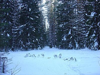 Суровый зимний поход в февральскую стужу. Лагерь зимой