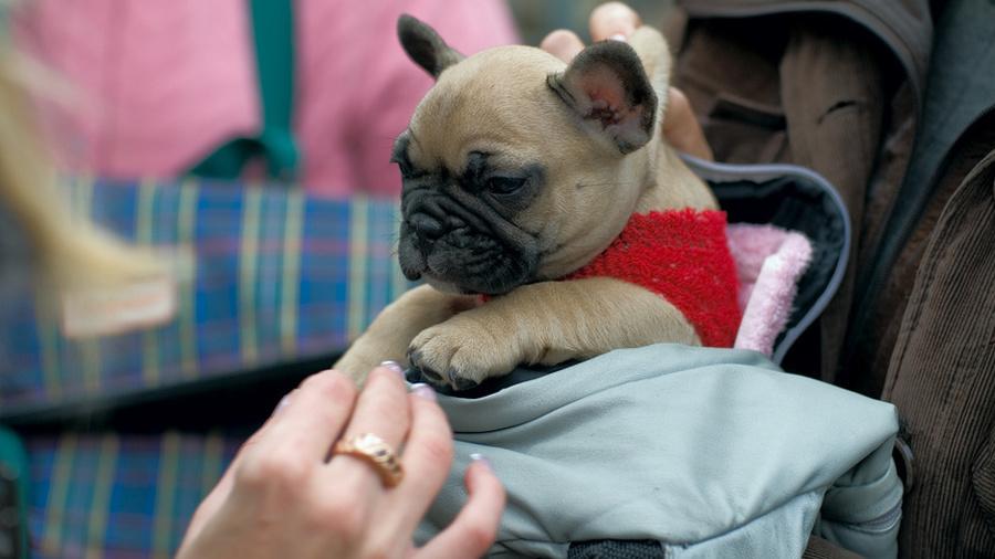 Пёс в мешке